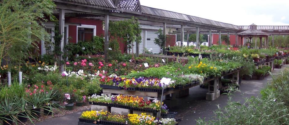 Garden Shop & Nursery